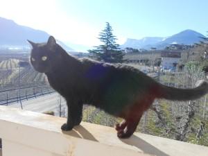 Marling Februar 2014: Meine Katze Mimmi!