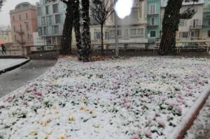 Blumen unter Schneedecke; Schnee Meran März 2013