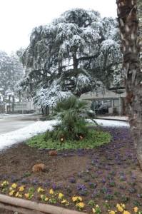 Palme im Schnee Meran März 2013