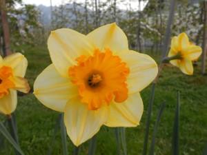 Schöne Frühlingsbilder 5.4.2014
